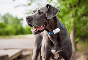 Choisir collier gps pour chien pas cher