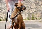 Choisir museliere pour chien