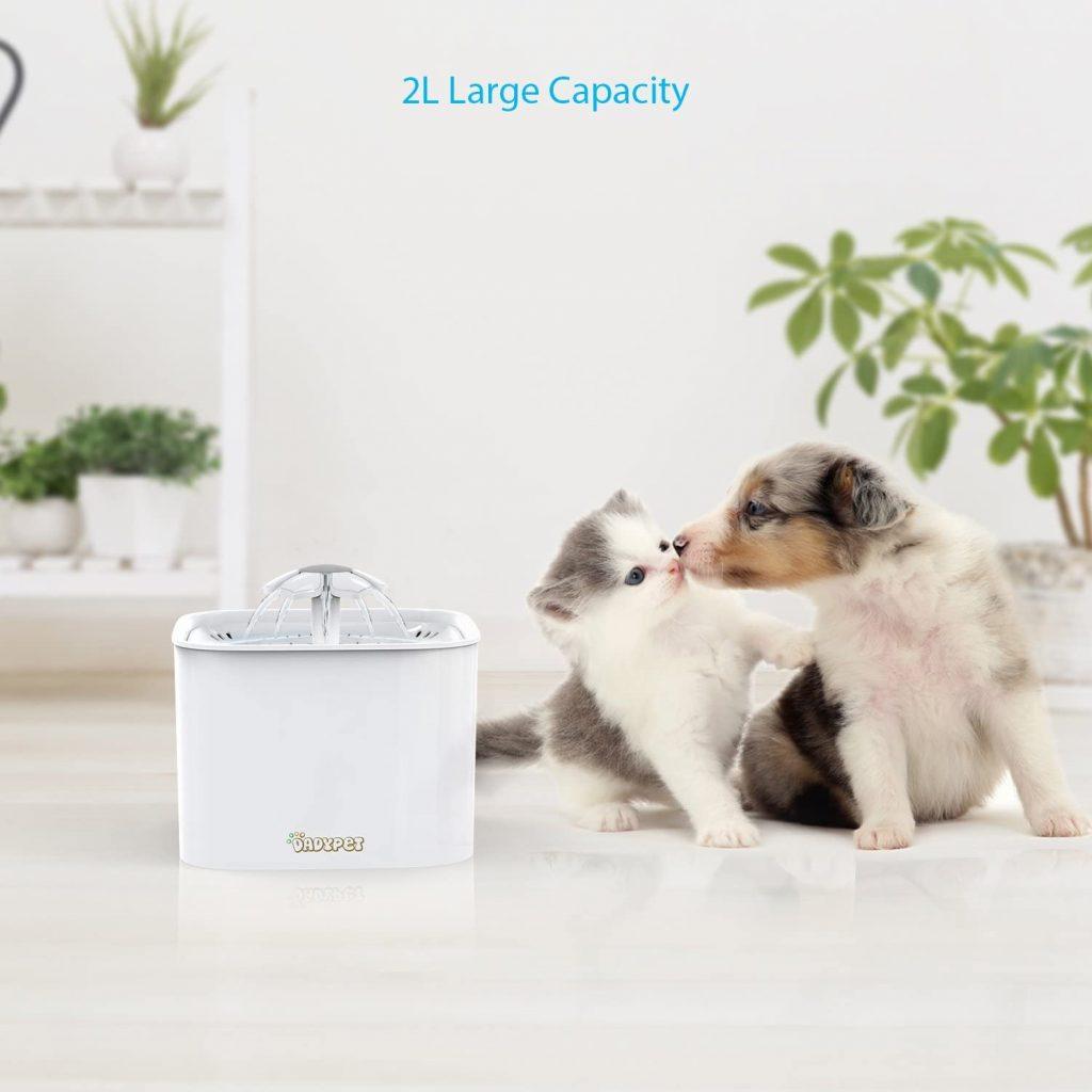 Choisir fontaine a eau pour chat